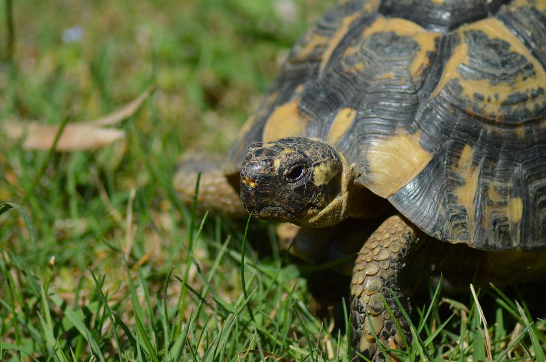 art Archive » Schildkrötenwelt