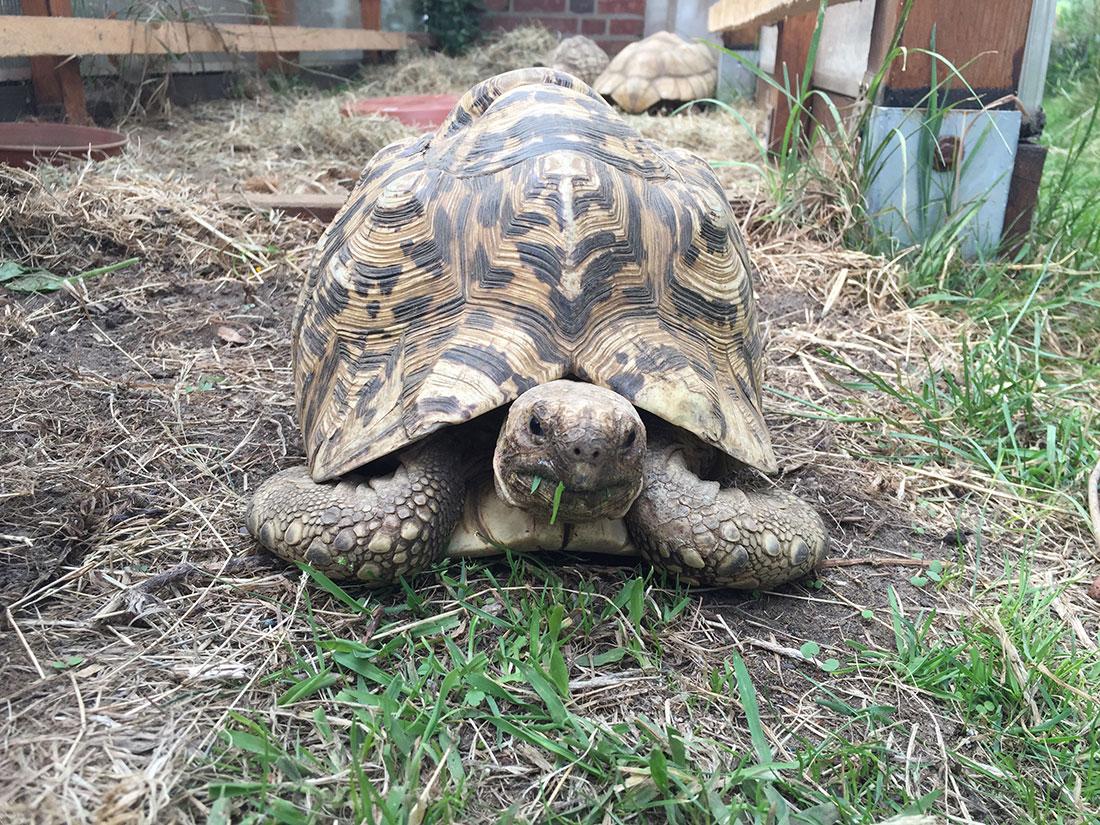 Schildkröten Kaufen Hier Kauft Man Schildkröten