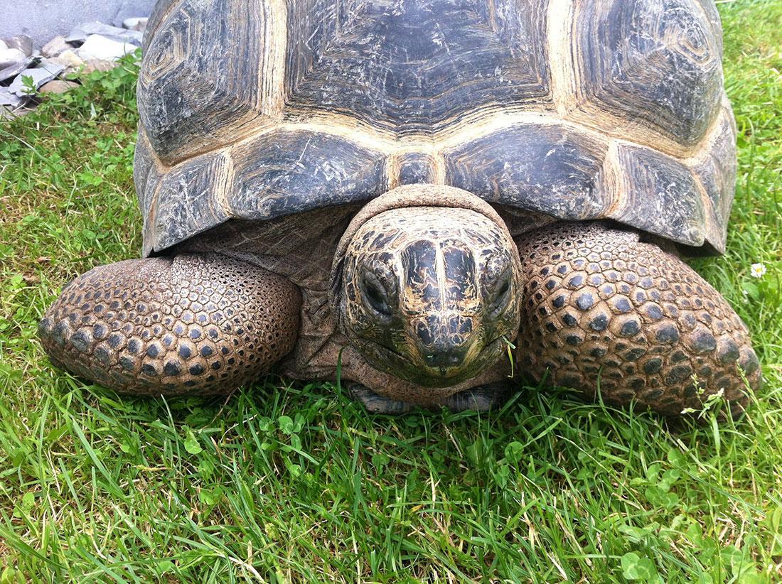 Mini Kühlschrank Für Schildkröten : Haltung archive schildkrötenwelt
