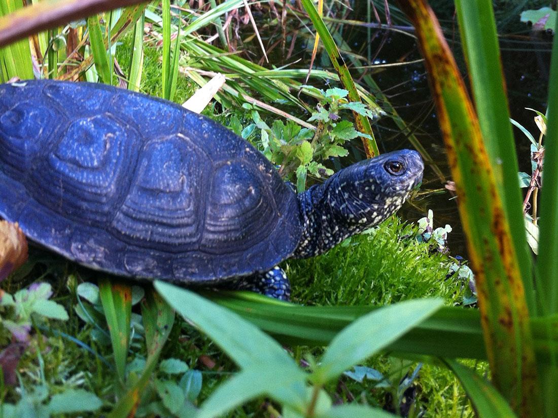 Wasserschildkröten in Auffangstationen